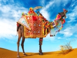 * Camel *