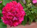 Summer Macro Blossom