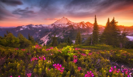 Mount Baker Sunset - forest, colors, beautiful, spring, sky, clouds, volcano, Cascade Range, mountains, wildflowers, Washington State, flowers, snowy peaks
