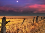 wheat fields under a moon at dusk