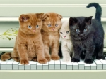 4 musicalcats performing