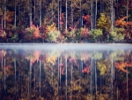 fog separating autumn forest reflection