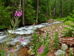 flowers by a rapid forest rever