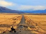sheep crossing a road in a chilean prairie