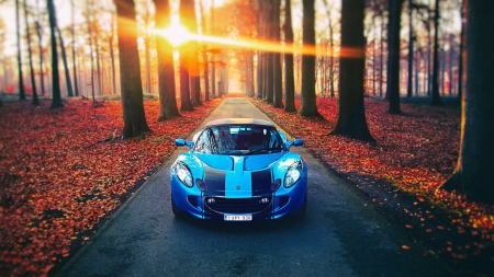 blue lotus in a red autumn forest at sunrise - red, forest, autumn, car, road, blue