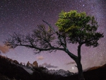 lonely tree under starry sky