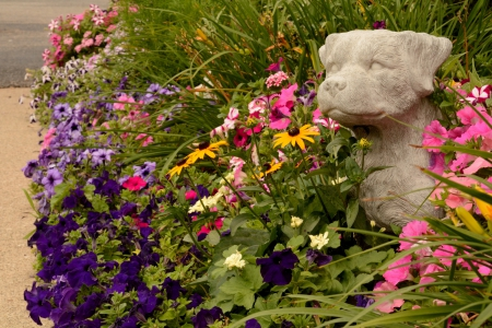 Doggy Daisies - colorful garden, Doggy Daisies, dog and flowers, dogs, canine gardens, flower garden