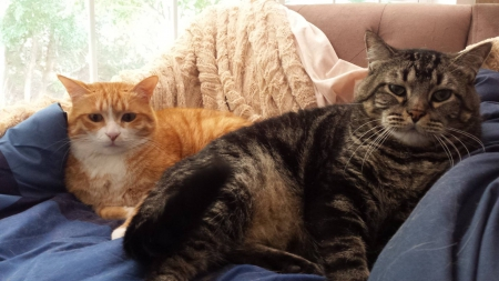 Marlon and Tom - friend, adopted, one, cats, other