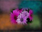 Flores&colores