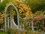 yellow rose trelis