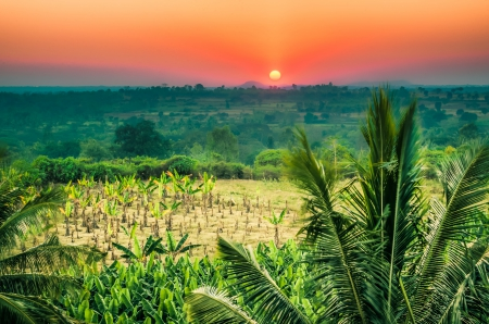 Tropical Sunset - hills, red, forest, sun, bananas, yellow, beautiful, sunset, palm trees, green, sunshine, field