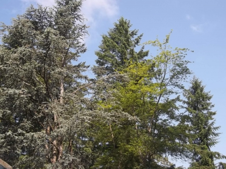 trees and blue sky - blue sky, green, clouds, trees