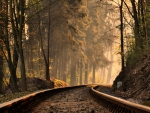 railroad track in a forest on a misty morning
