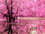 Pink tree reflection