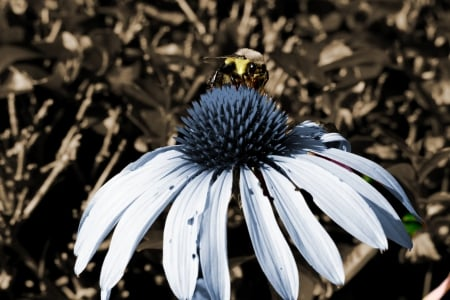 Flower Pollination - bees, honeybees, pollinating, Flower Pollination