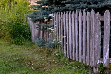 Lush Old Fence - fence, summer fence, Lush Old Fence, old fence, wooden fence