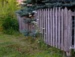 Lush Old Fence