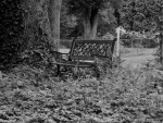 Relaxing Country Bench