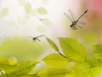 Dragonflies and Green Leaves Abstract