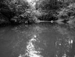Monochrome Pond