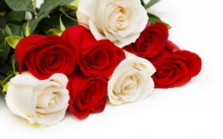 Beautiful Red And White Roses Flowers Nature Background