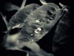 Taste rain