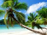 Summer Beach, Seychelles