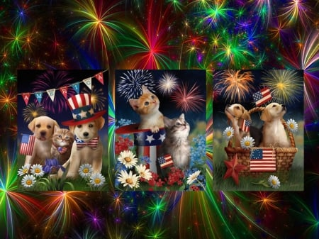 Celebration - stars, hats, fourth of july, states, collage, flags, usa, basket, fireworks, flowers, america, cats, dogs