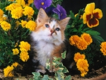 cute kitty among flowers