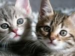 cute kitten twins