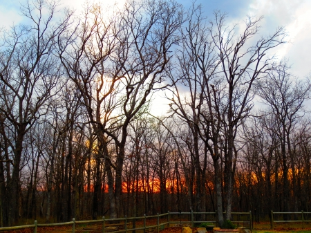 Forest Beauty - Forest, Woods, Sky, Clouds, Orange, Sunset