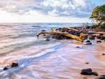 drift logs on a lovely beach