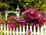 Flowers on the fence