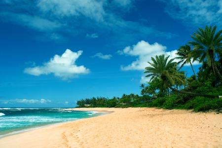 hawaiian beach beaches nature background wallpapers on desktop