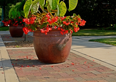 Beautiful Summer Scene - red roses, summer scene, Beautiful Summer Scene, summer flowers, rose pot, red flowers, flower pot