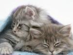 under a blanket