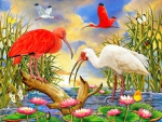 ✬Scarlet and White Ibis✬