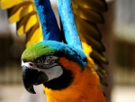 Beautiful Macaw