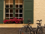 bicycles under a lovely window