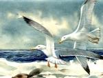 Gulls at Seashore f