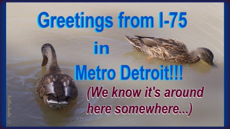 Getting Along Swimmingly in Metro Detroit... - border, wet, frame, damage, ducks, 1augh, Detroit, duck, co1d, flood, freeway, Michigan, Interstate, border1ine, highway, metro Detroit, fow1, waterfowl, water, humor, flooding