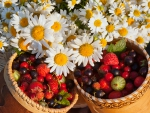 Berries and daisies