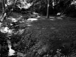 Backyard Summer