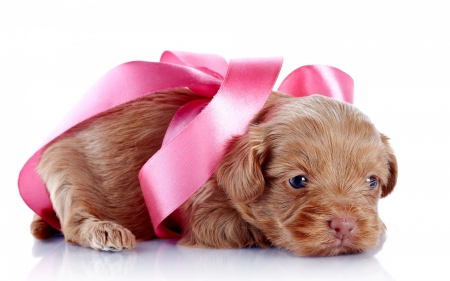 Puppy - cute, bow, white, pink, puppy, dog, animal, sweet