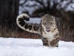running snowleopard