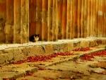 Cat of Spain