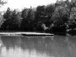 Summer Pond View