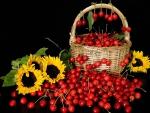 Cherries and sunflowers