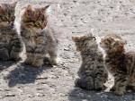 kittens walk