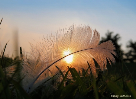 Caught in a Feather - cloud, feather, nature, sunset, country, sky, field